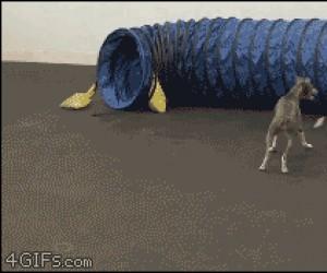 Psie zabawy