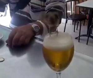 Ptak alkoholik