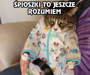 A pamiętasz jeszcze, że jestem tylko kotem?