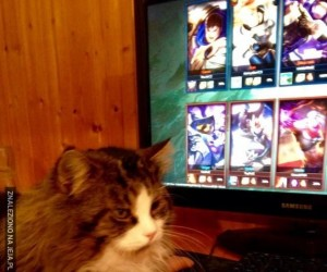 Każdy właściciel kota zna ten problem