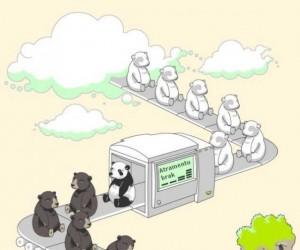 Jak powstały misie panda?