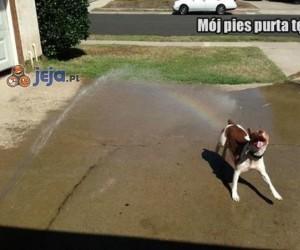 Mój pies purta tęczą!