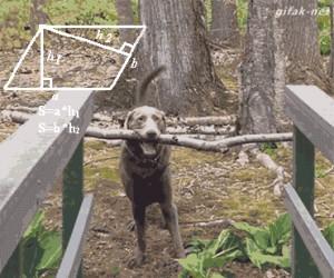 Pies, który ogarnia wzory lepiej niż Ty...