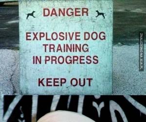 Uwaga, wybuchające psy