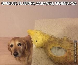 Operuję ulubioną zabawkę mojego psa