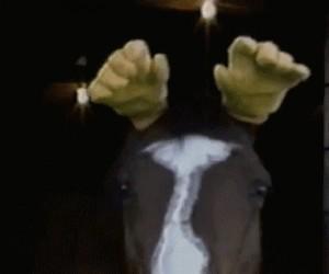 Koń w rękawiczkach