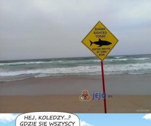 Przyjazny rekin nie ma łatwego życia