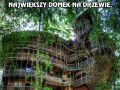 Największy domek na drzewie, jaki kiedykolwiek powstał