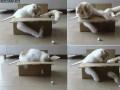 Kot, karton i papierowa kulka