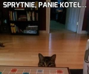 Sprytnie, panie koteł...