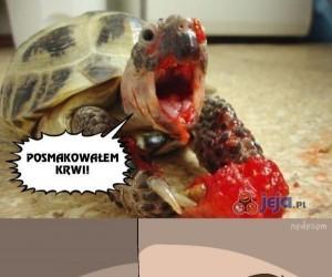 Mój żółw jest psychopatą