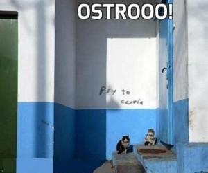 Ostrooo!