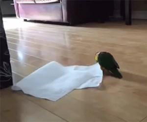 Ręcznik papierowy! Ja mam ręcznik papierowy!