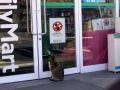 Kotom wstęp wzbroniony