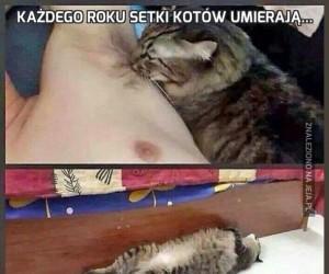 Każdego roku setki kotów umierają...