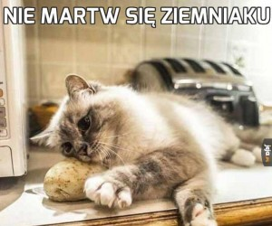 Nie martw się ziemniaku