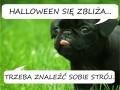 Halloween się zbliża...