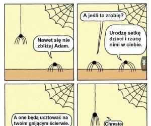 Problemy pająków