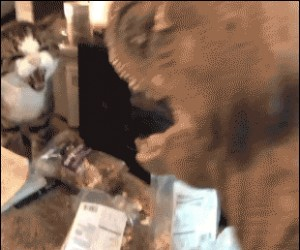 Usunięta scena z Jurassic World