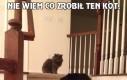 Nie wiem co zrobił ten kot,