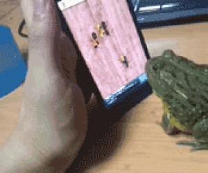 Zła żaba