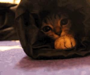 Przyczajony koteł