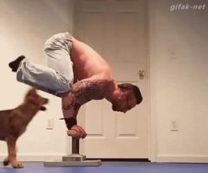 Psiaki zawsze pomocne!