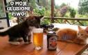 Moje ulubione piwo!