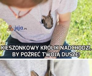 Strzeż się kieszonkowego królika!