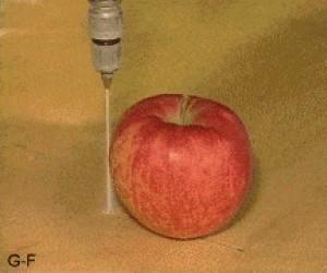 Jabłko przecięte wodą