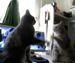 Pełna synchronizacja kotełów