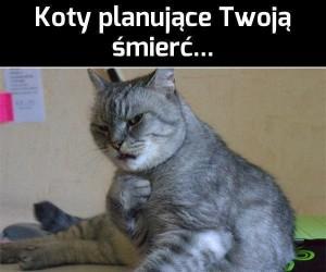 Koty planujące Twoją śmierć...