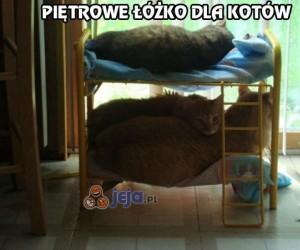 Piętrowe łóżko dla kotów