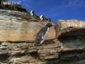 Pingwini parkour