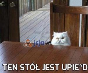 Kocie, o co ci chodzi?