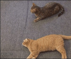 Leniwy kot próbuje pomóc
