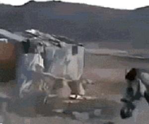 Koń spotyka swojego przyjaciela