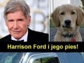 Ford pies i jego Harrison
