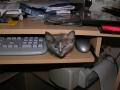Kotek i myszka