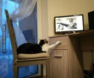 Nazi-kot zdemaskowany
