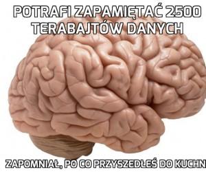 Po co mi mózg, skoro mnie nie słucha?