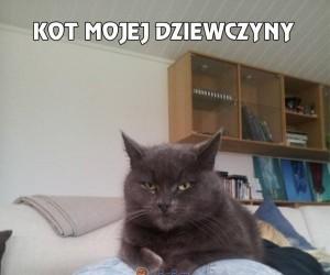Kot mojej dziewczyny