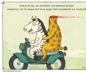 Zebra i żyrafa w podróży