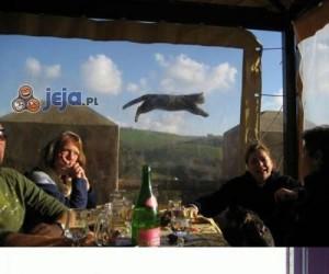 Uwaga, koteł w kadrze!