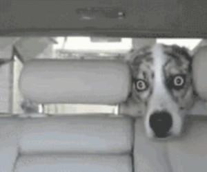 Gdzie my jedziemy?
