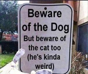 Dziwny kot