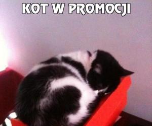 Kot w promocji