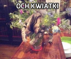 Koteł florysta