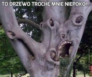To drzewo trochę mnie niepokoi...