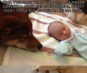 Opiekuńczy pies